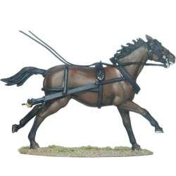 Draft horse 4